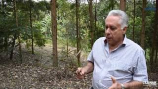 Clonar e FAPEMIG desenvolvem pesquisa sobre a doença ferrugem em espécie de eucalipto
