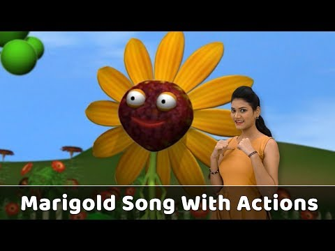 Marigold Flower Song With Actions | Flower Rhymes For Babies | Learn Flowers Kids | Toddlers Songs