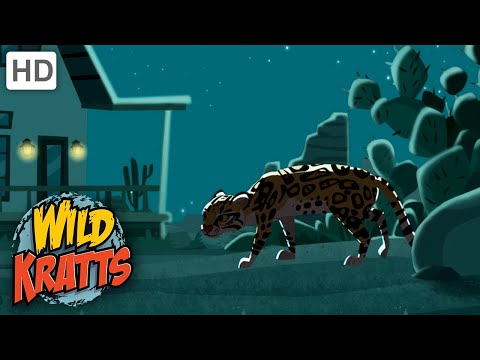 Wild Kratts | Searching For An Ocelot | Animals