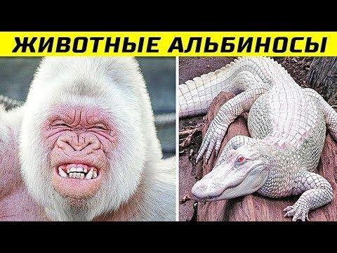 8 Самых Невероятных Животных Альбиносов в Мире