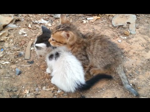 The story of two abandoned kittens and a stray dog