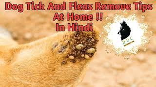 घरेलू तरीके से Dog  की Ticks and Fleas कैसे दूर करें  !! Dog Tick  and fleas removed at home