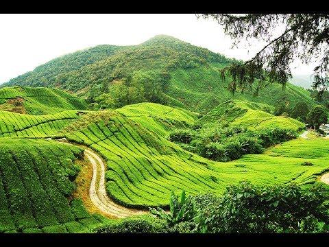 Astonishing nature scenes, from penang to kuala lumpur, Malaysia.