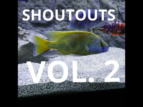 Shoutout series are back! VOL. 2