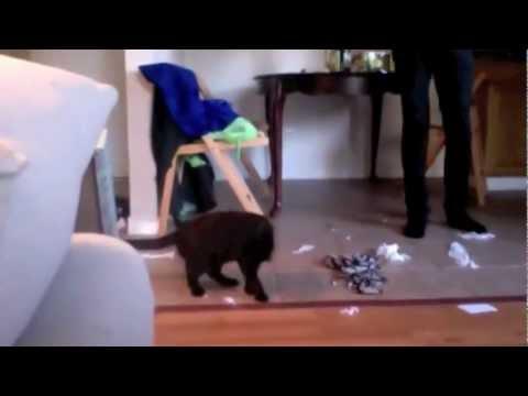 Kitten dance- YEZZIR