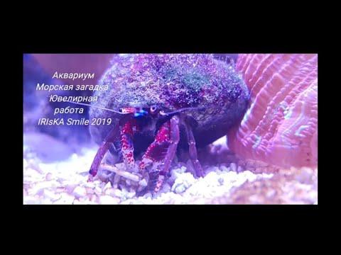 Вопрос: Как очистить аквариум рака отшельника?