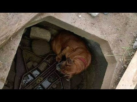 Собака ждала свою страшную участь на дне колодца, когда на помощь к ней пришла 6-летняя девочка