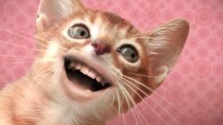 Singing Cats