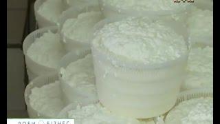 Секрети французького сиру Брі на українській сироварні