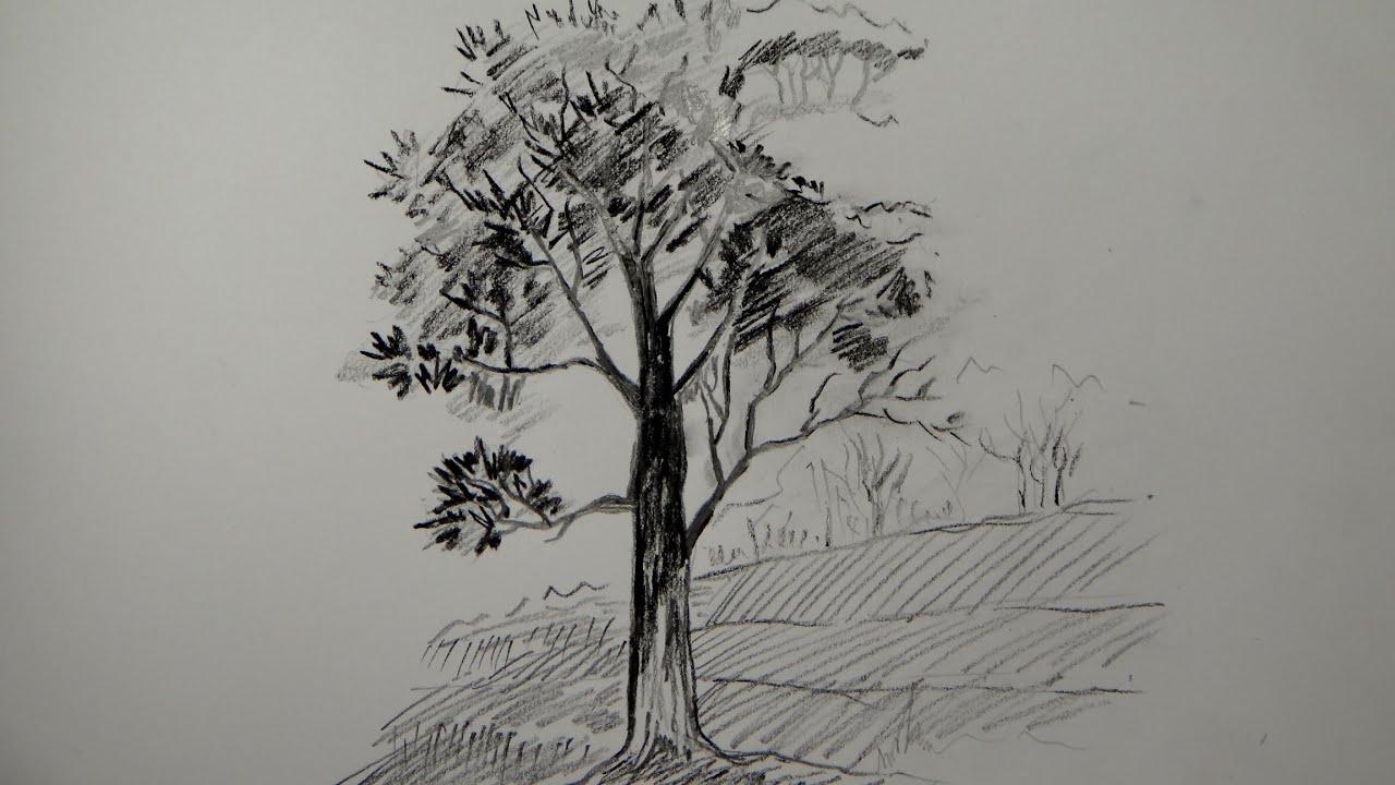 Draw Tree Pencil Simple