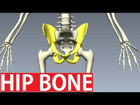 pelvic bone anatomy pdf free