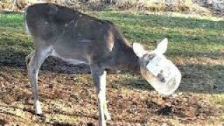 Deer Rescued After Spotted With Something Stuck On Its Head
