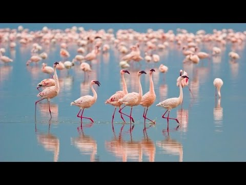Bolivia's Salar De Uyuni & Chile's Wildlife Wonders in 4K | Nature Relaxation™ Experience