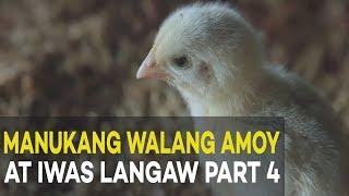manukang walang amoy at iwas langaw broiler management agribusiness broiler farming part 4