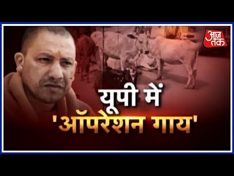 जब तक दूध तब तक माता, दूध नहीं तो बंद खाता! कैसे बना गाय किसान का दुश्मन?   Aajtak Exclusive