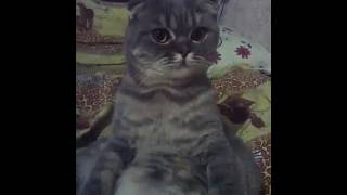 Кот кусает руки