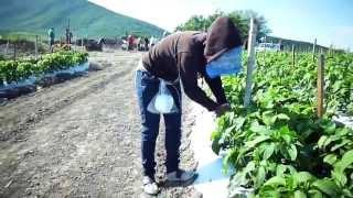 Proyecto ISAJU San Gabriel Jalisco