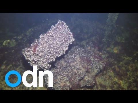 Divers find wreckage thought to be crashed US WW2 bomber