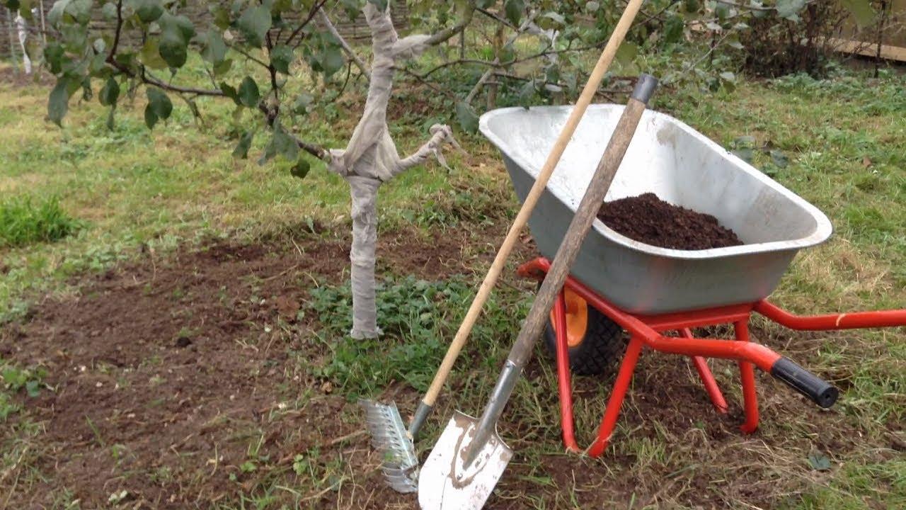 247. Как правильно подготовить сад к зиме.