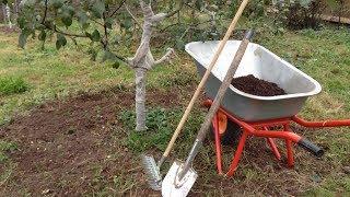 видео Уход за садовыми деревьями. Обрезка старых и молодых деревьев.