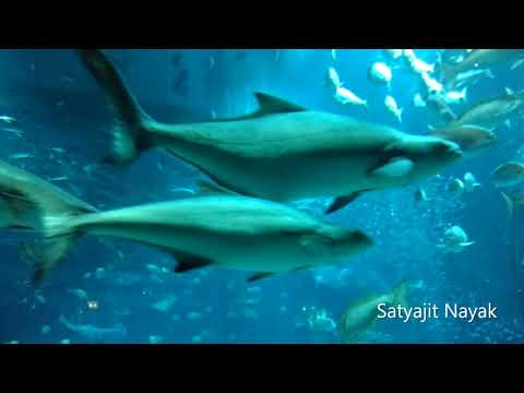 The Lost Chambers Aquarium /Atlantis Dubai