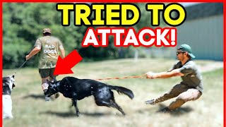 EXTREMELY LEASH AGGRESSIVE GERMAN SHEPHERD TRIES TO ATTACK DOG! (HOLY CRAP!)