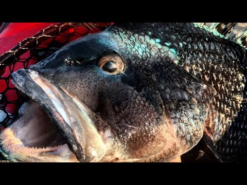 Structure Fishing - Slamming Some Nice Sea Bass