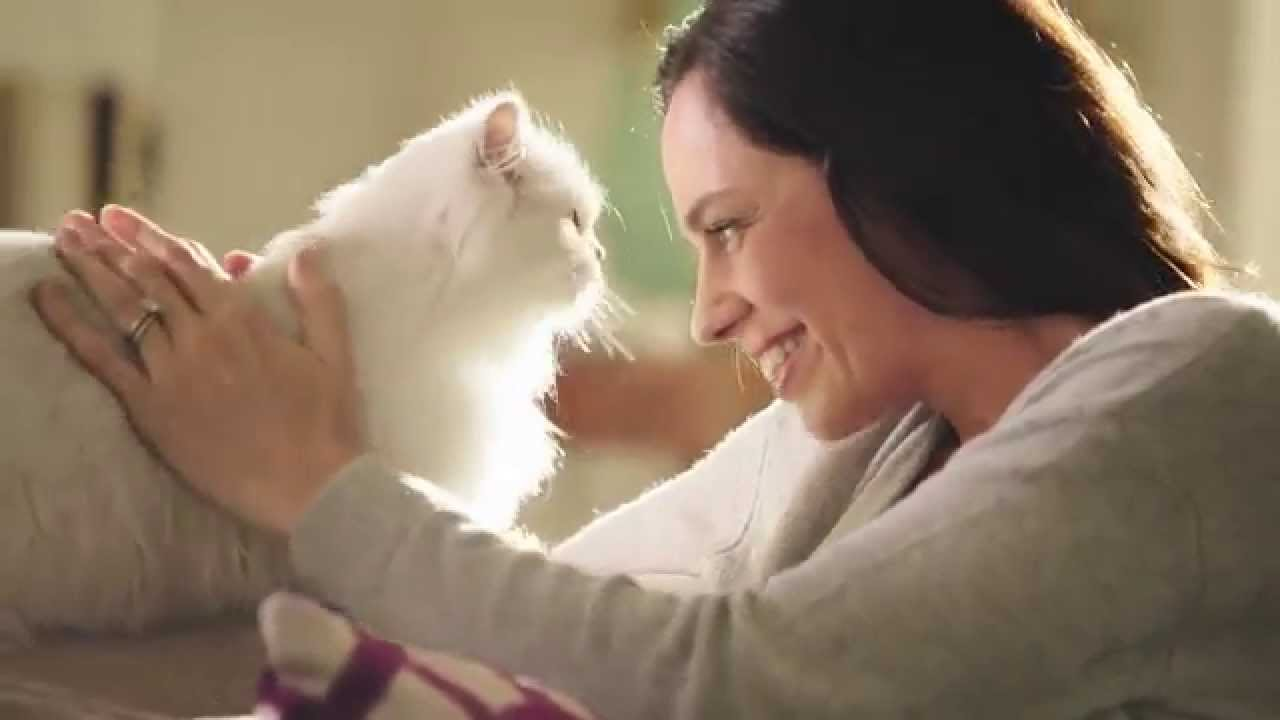 How To Get Your Cat In Commercials