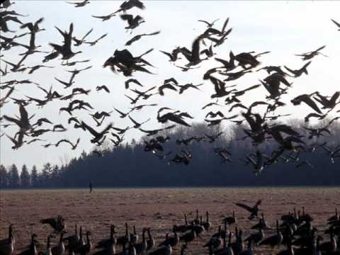 Elbow - The Birds mp3