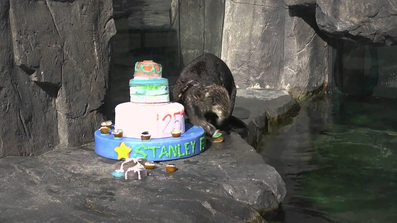 Sea Otter Eats Birthday Cake Youtube