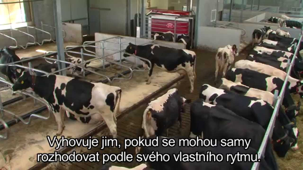 Lely Astronaut A4 - Benefits cow (Czech)