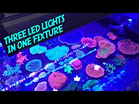 Download Youtube: Recurve LED Review: An AWESOME New Kind of Aquarium Light!