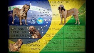 Фила Бразилейро    Fila Brasileiro