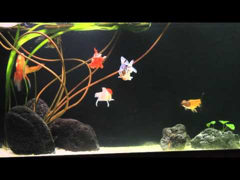 Aquarium 250l fond noir sable blanc youtube for Fond aquarium