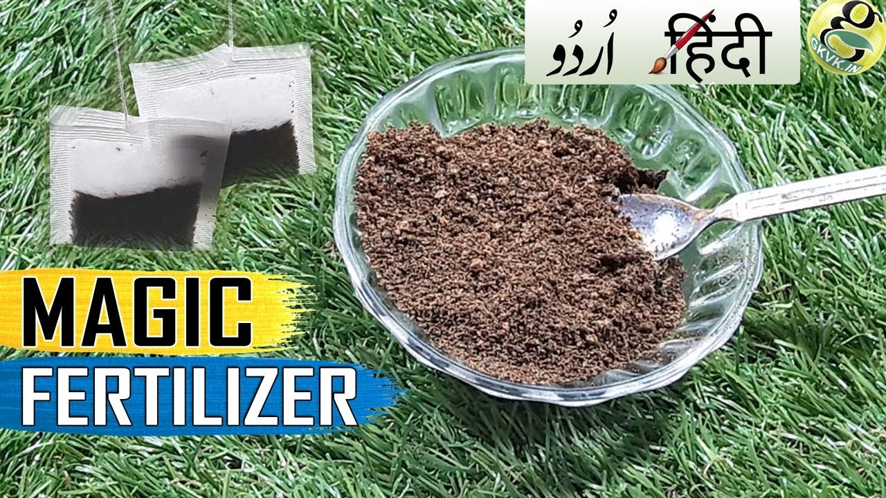 Magic Fertilzier For Flowering Tea Waste And Coffee Grounds For