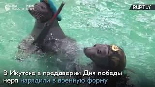 Нерпы в Иркутске