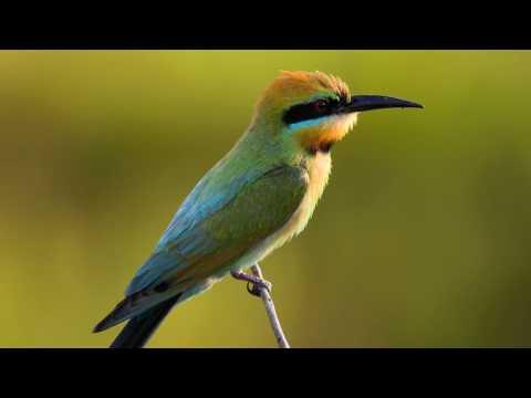 Through the Lens: Birds of Australia's Northern Territory