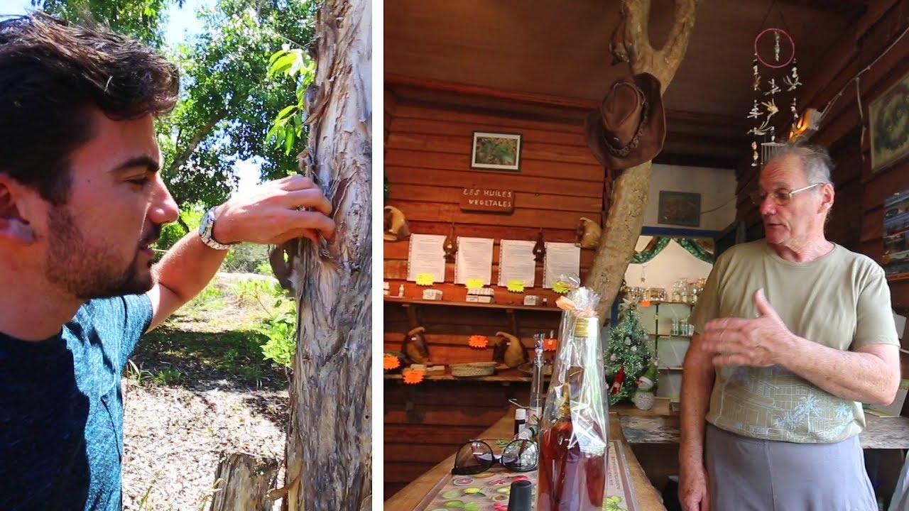 Visite de la distillerie Niaouli de Boulouparis (Nouvelle-Calédonie)