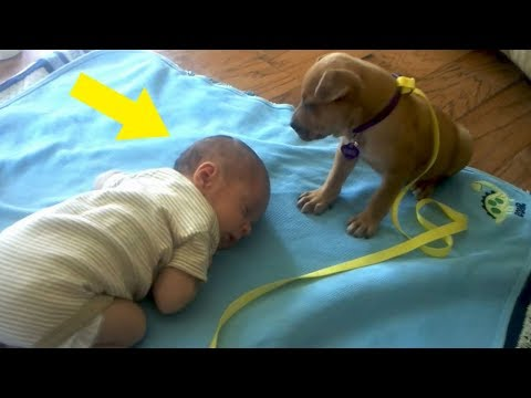 A Mom Was Filming As Her Baby Fell Asleep – And Caught The Moment Their Puppy Approached