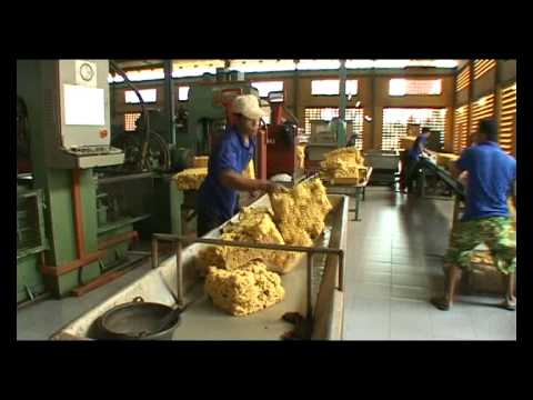 Usine de latex au cambodge youtube - Usine de meuble au portugal ...