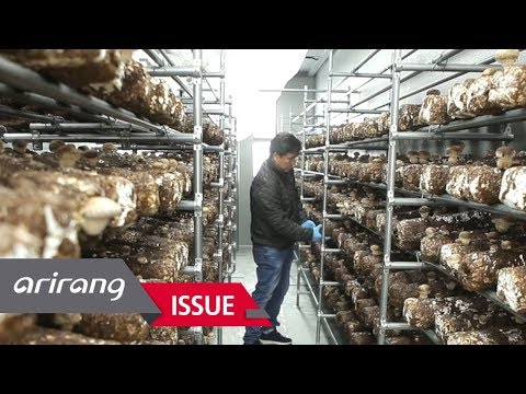 [Money Monster] Korean smart farming leading the global market