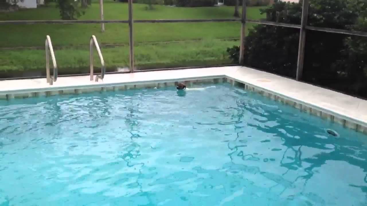 crazy swimming dog