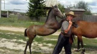 Russian horses / Русские лошади