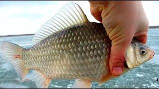 Рыбалка на озере Сугояк 2 зимний карась закрытие сезона последний лед