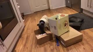 BowWowKnowHow - Scent Work - Dog Behaviour Training