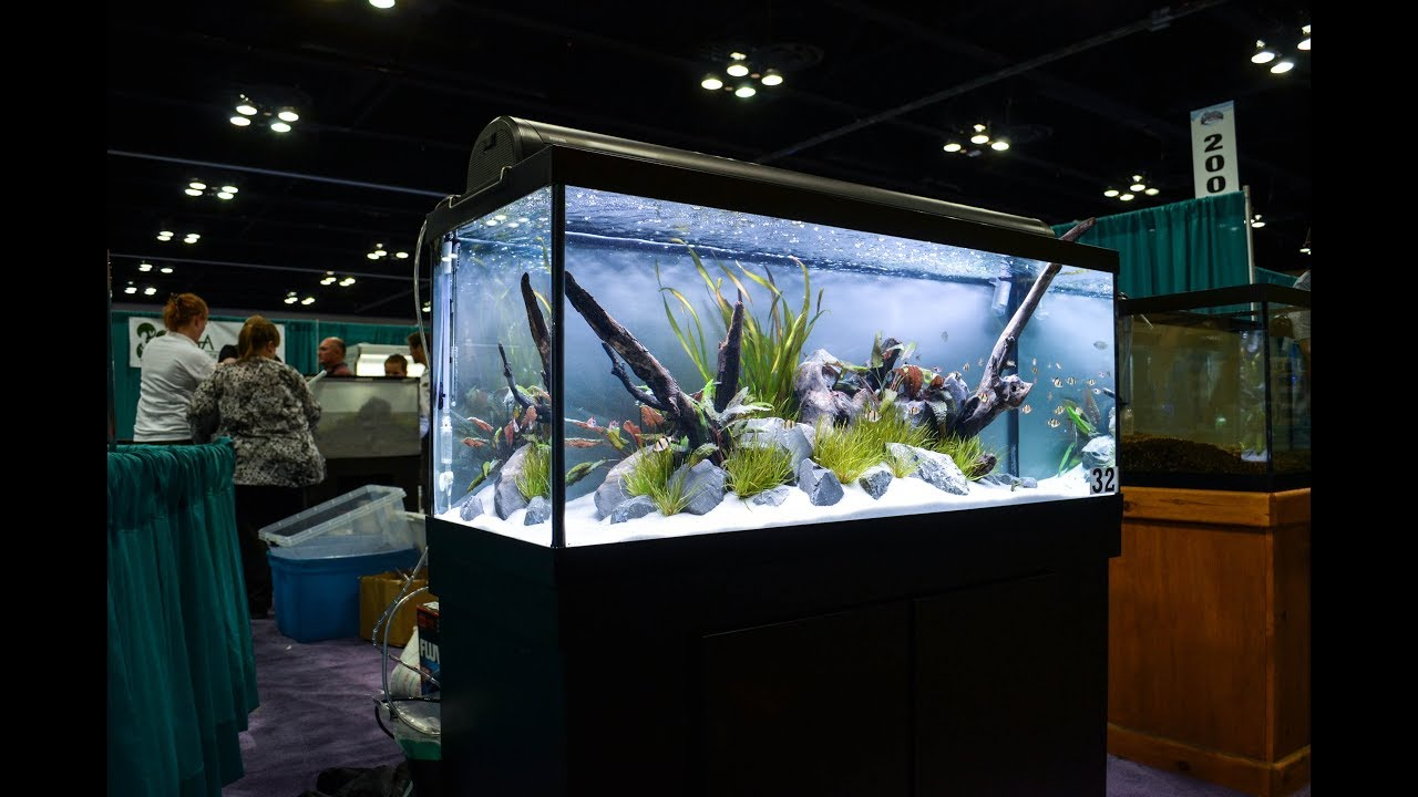 "2014 Aquatic Experience AGA Aquascaping Contest | ""Flow ..."