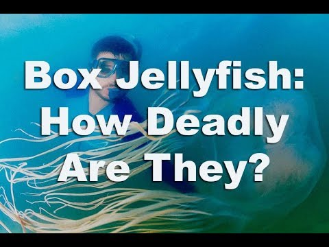 Box Jellyfish - The Deadliest Jellyfish In The World