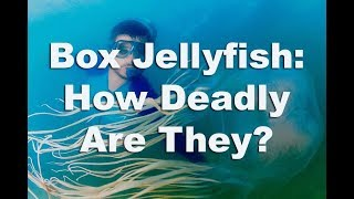 Box Jellyfish -  The TRUTH About 2017's Deadliest Jellyfish