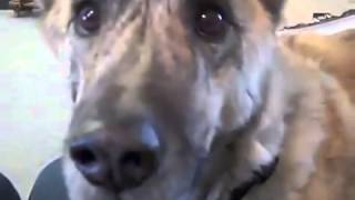 Самая популярная говорящая собака 2013 года