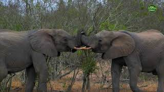 Moment of the Week: Learning about the flexibility and strength of elephant trunks